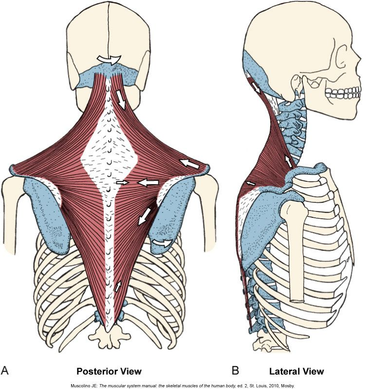 Pin By Deb Libby On Anatomy Quiz Pics In 2018 Pinterest Anatomy