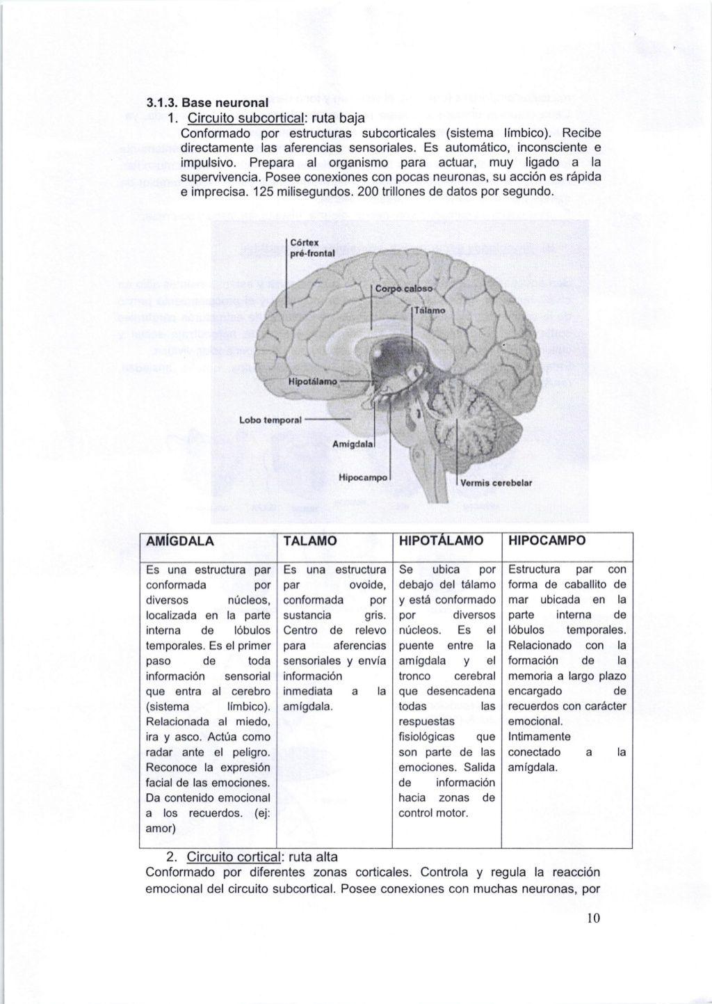 Circuito Neuronal : Base neuronal circuito subcortical ruta baja conformado