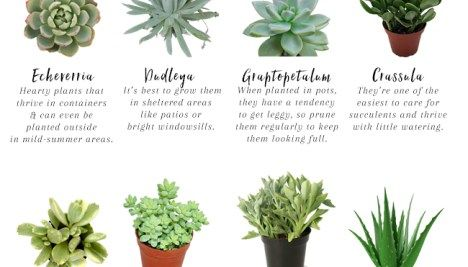 11 Easy To Grow Houseplants Succulent bowls and Houseplants