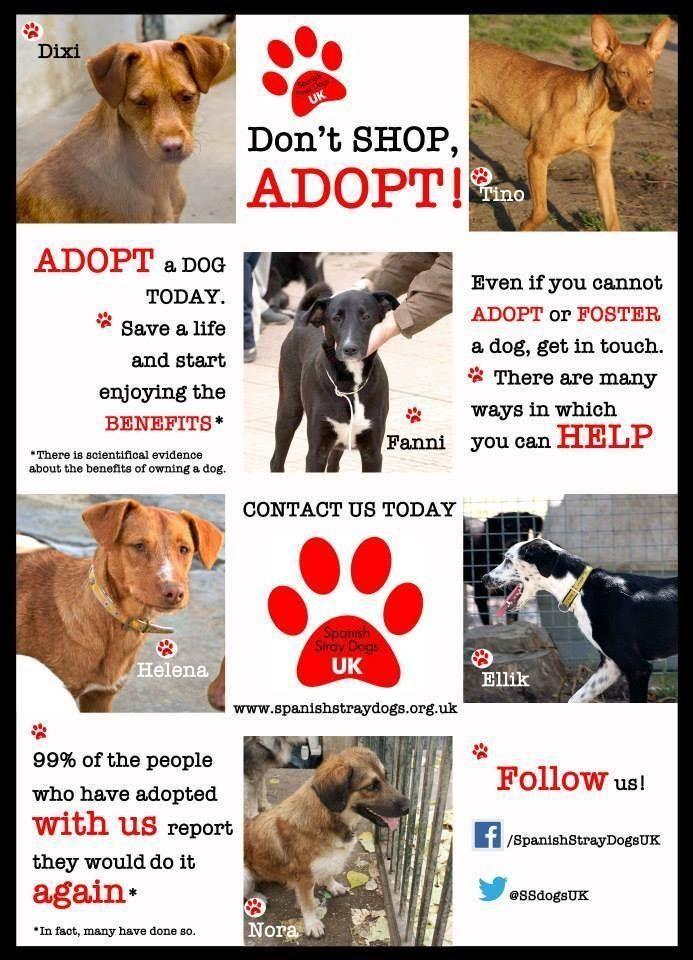 Please Adopt Dog Adoption Dog Love Dogs