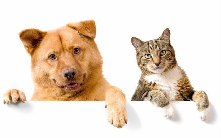 Scarica sfondi cane e gatto, amici, marrone, cane, gatto