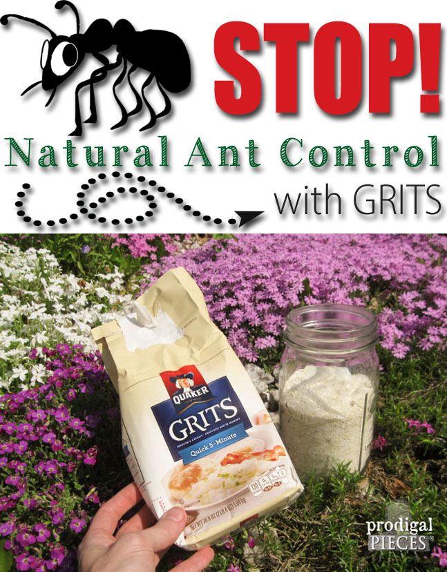 natural ant control with grits hometalk spring inspiration pinterest jardinage jardins. Black Bedroom Furniture Sets. Home Design Ideas