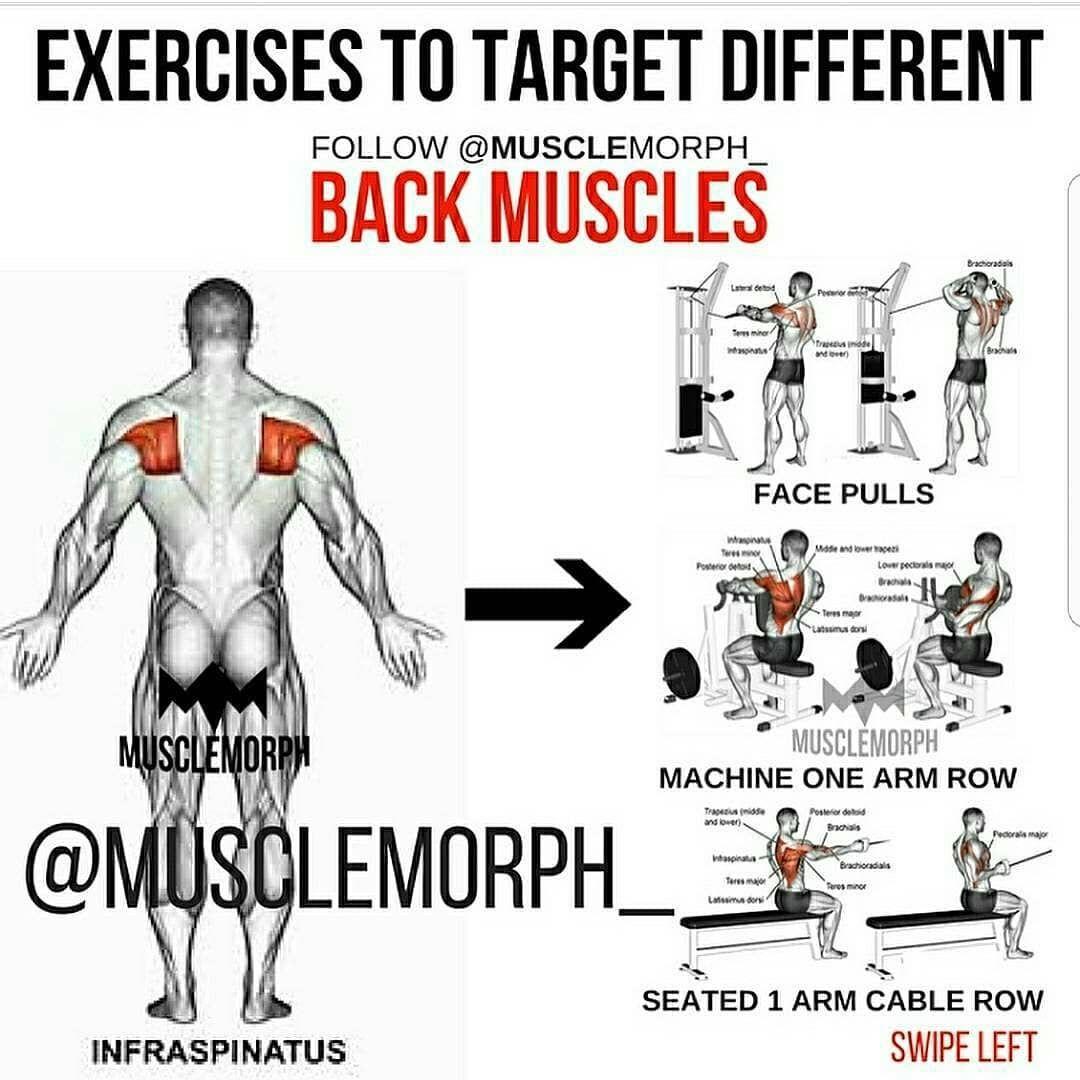 Back Muscles Training Exercise Pinterest Workout Back