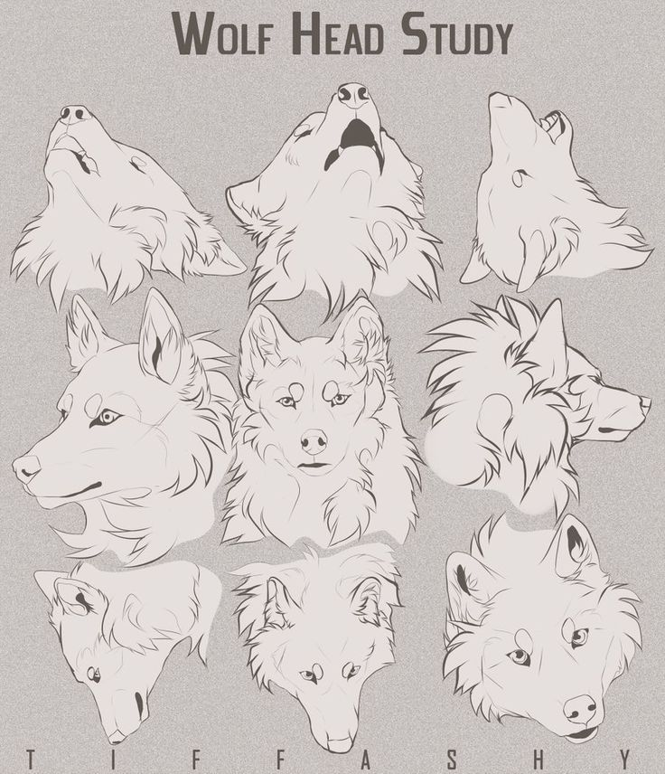 Wolf Head Study Tutorial By Tiffashy On Deviantart Deviantart Studytutorial Tiffashy Wolf Wolf Sketch Wolf Face Drawing Anime Wolf Drawing