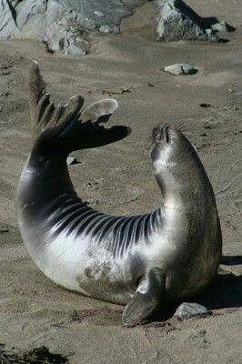 Sassy Seal Animales Marinos Mamiferos Marinos Foca