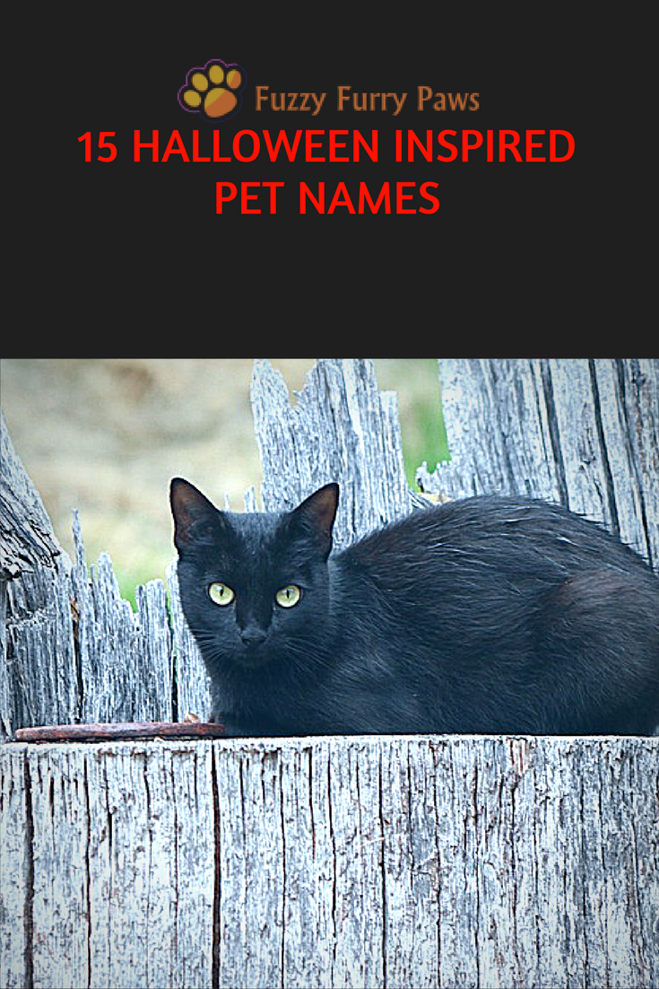 Bewitching Witch Names for Halloween Witch names, Gothic
