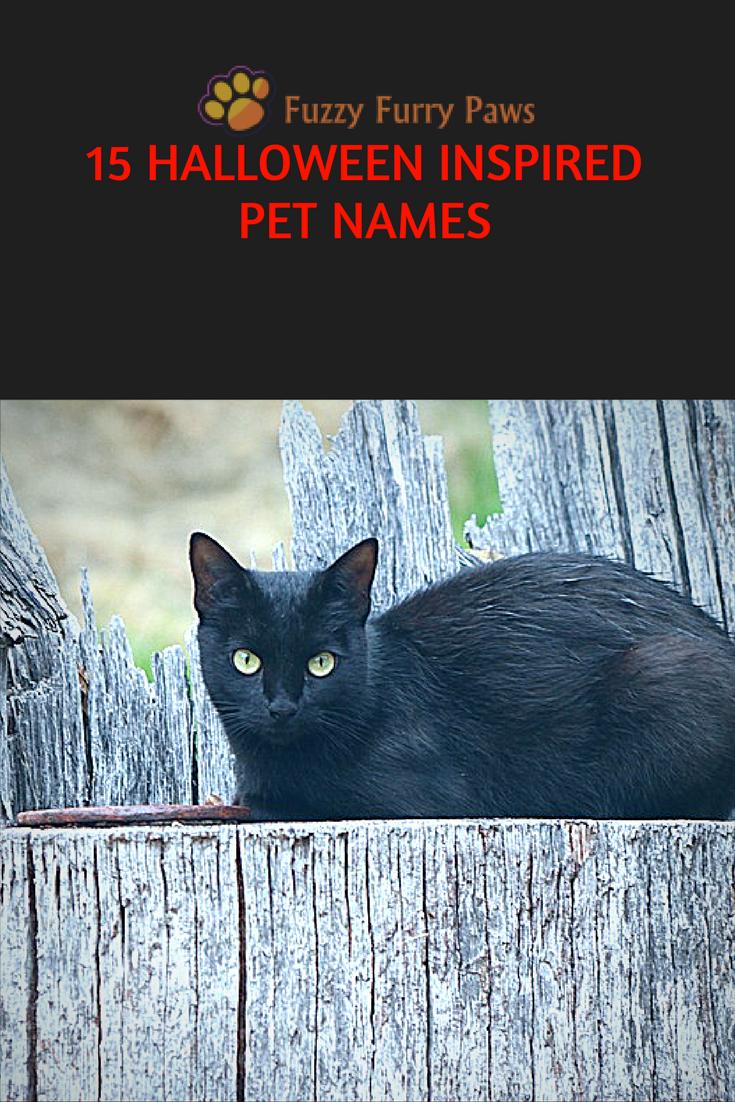 15 Halloween Inspired Pet Names Pet names