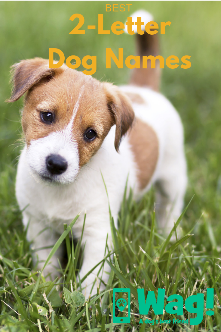 Best 2 Letter Dog Names Wag Dog Names Top Dog Names Dogs