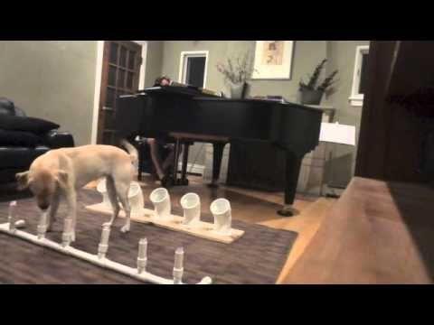 Scent Training Devices Youtube Dog Training Dog Training