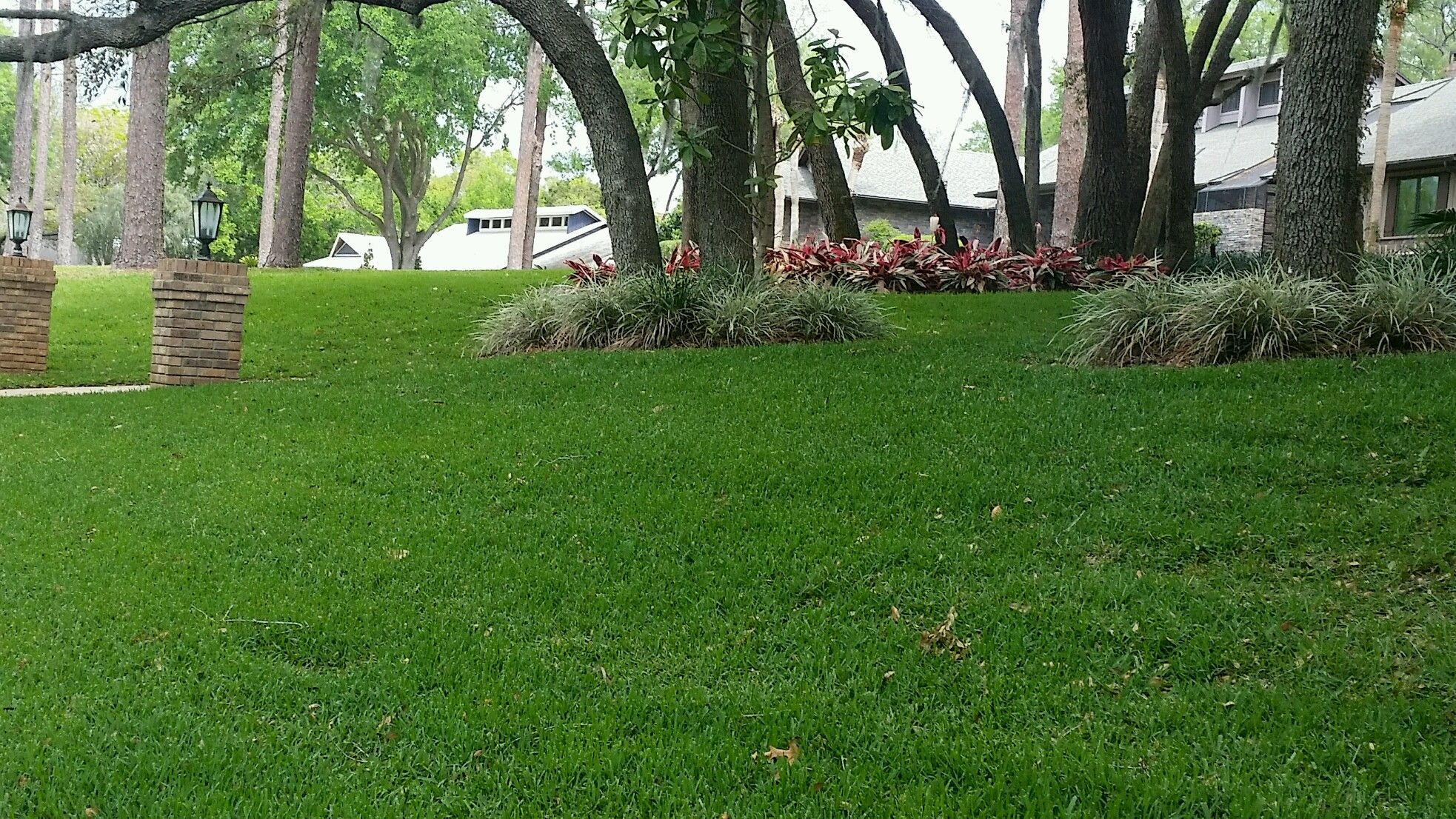Evergreen lawn pest control lawn pests lawn pest