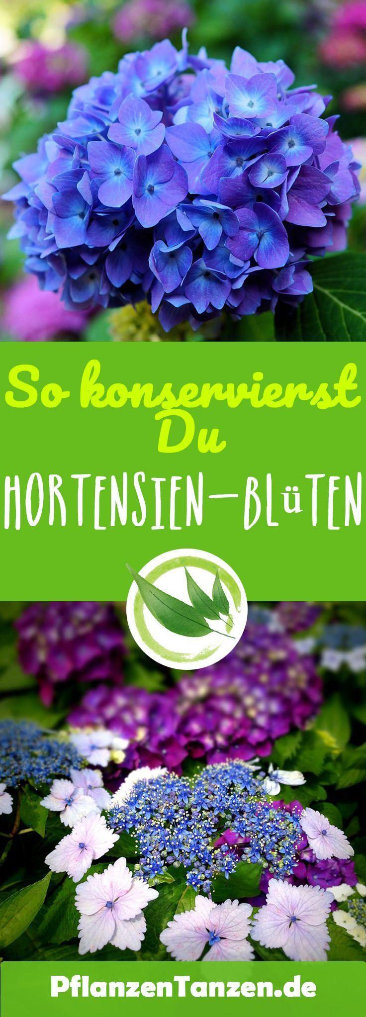 【ᐅ】Hortensien Pflege 2020 - Schneiden, vermehren, überwintern