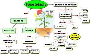 Resultado De Imagen Para Esquema Sobre El Proceso De La Fotosintesis Fotosintesis De Las Plantas Proceso De La Fotosintesis Fotosintesis