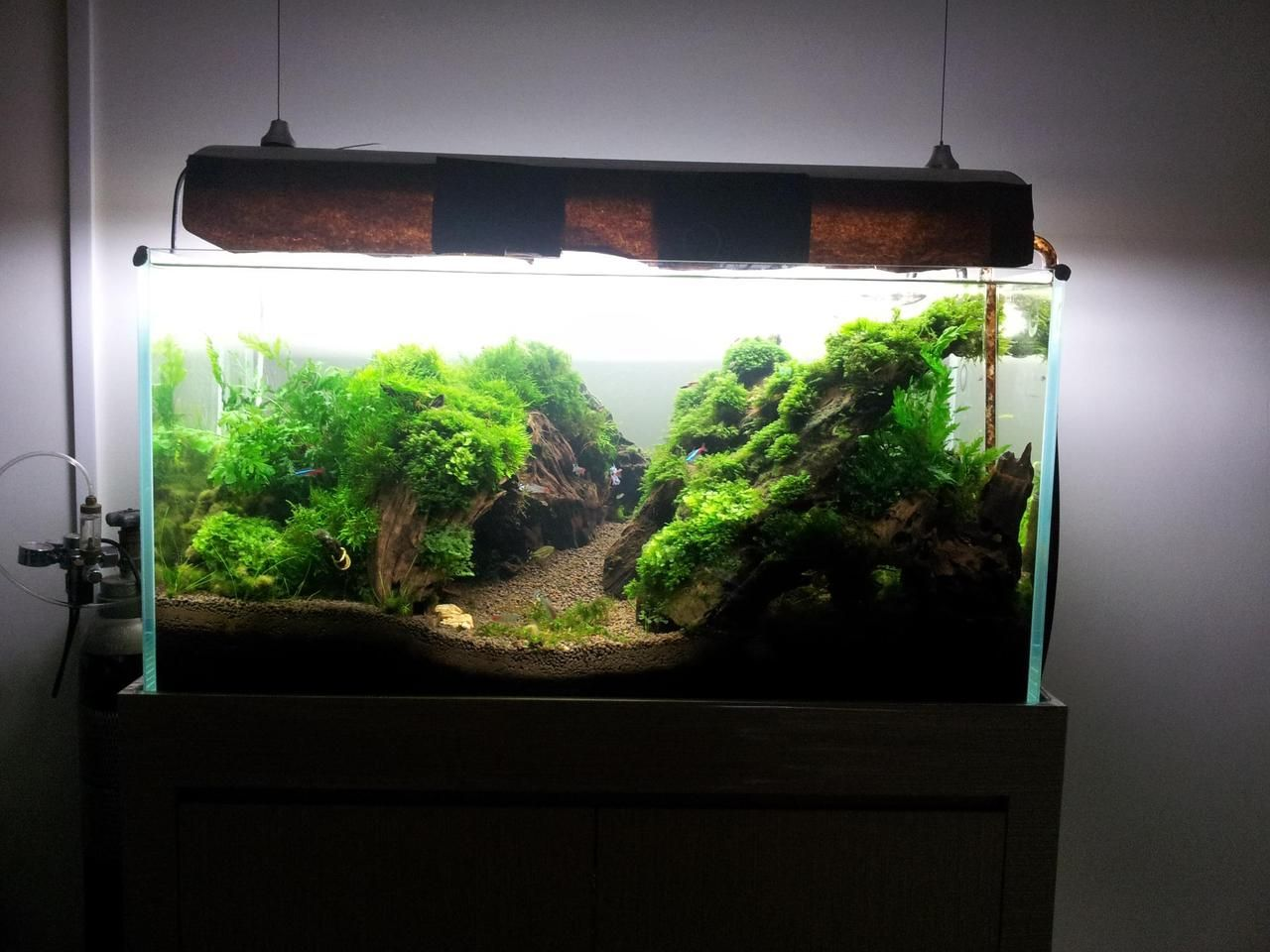 Fish aquarium how to maintain -  Mossy Tank I Really Like The Simplicity Of Moss Tanks They Are Easy To