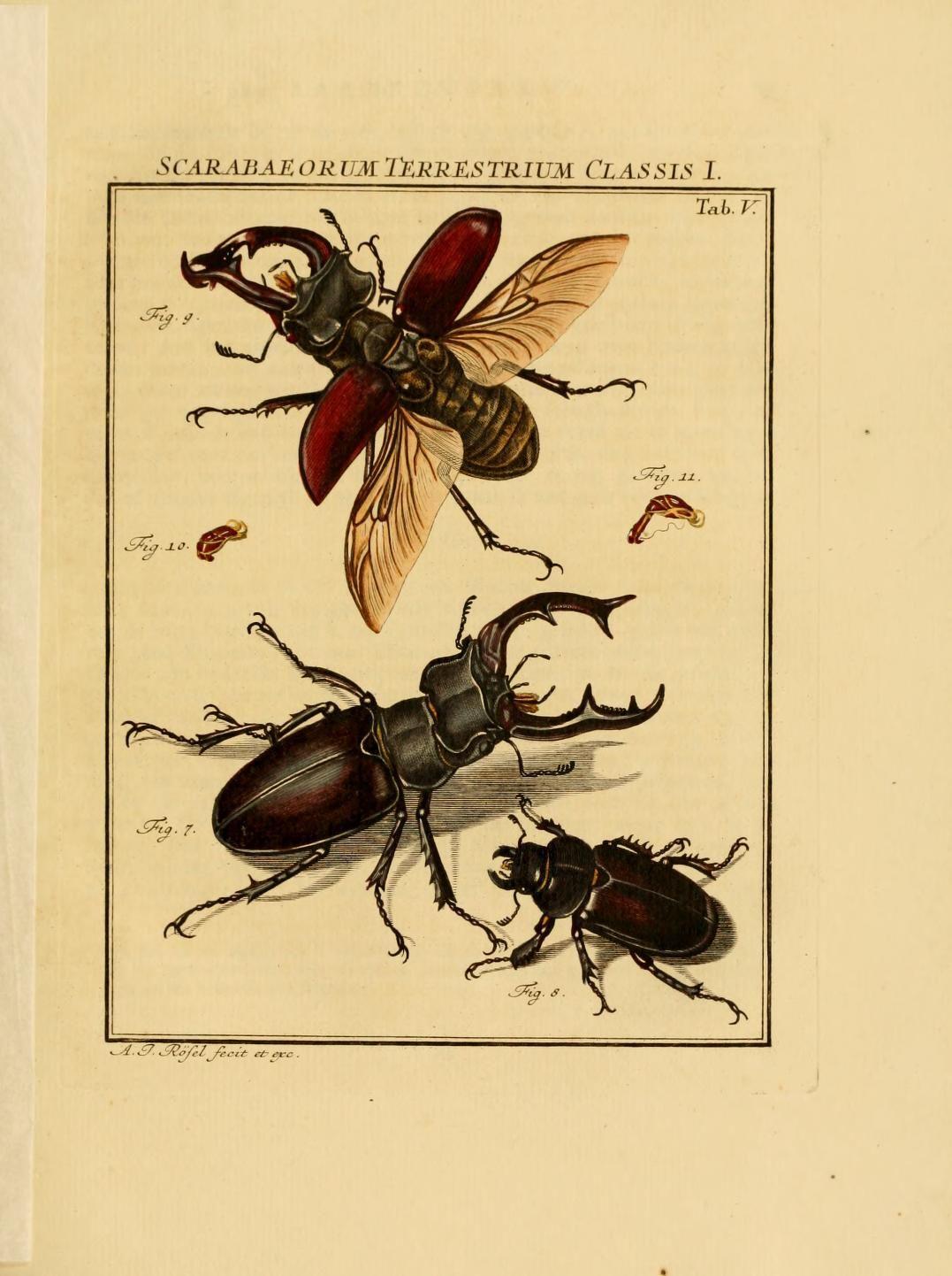 D.1,pt.2 - De natuurlyke historie der insecten; - 1764