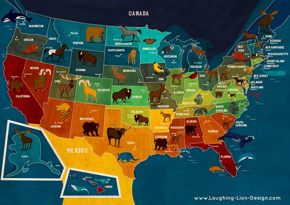MAP OF ANIMALS OF USA MAPA DE ANIMALES DE EEUU Source Jennifer