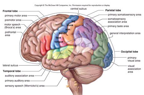 Brain Food: Foods that help you to concentrate, increase