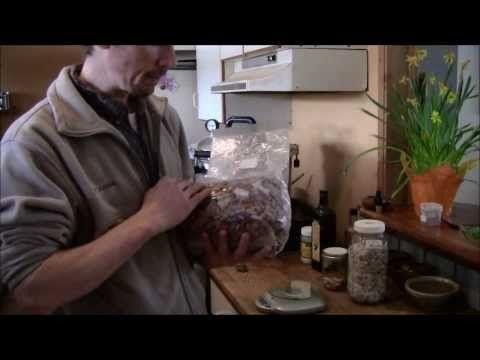 Making Mushroom Plugs (when working with mushrooms sterilise everything)  - YouTube