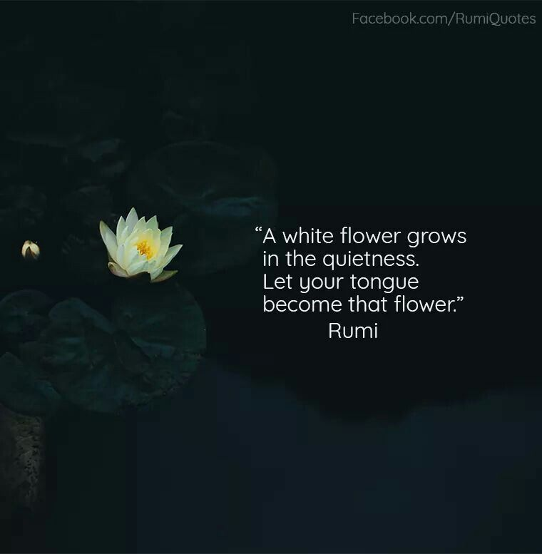 Pin by Laura Pierce on Says It All | Rumi quotes, Poetry ...