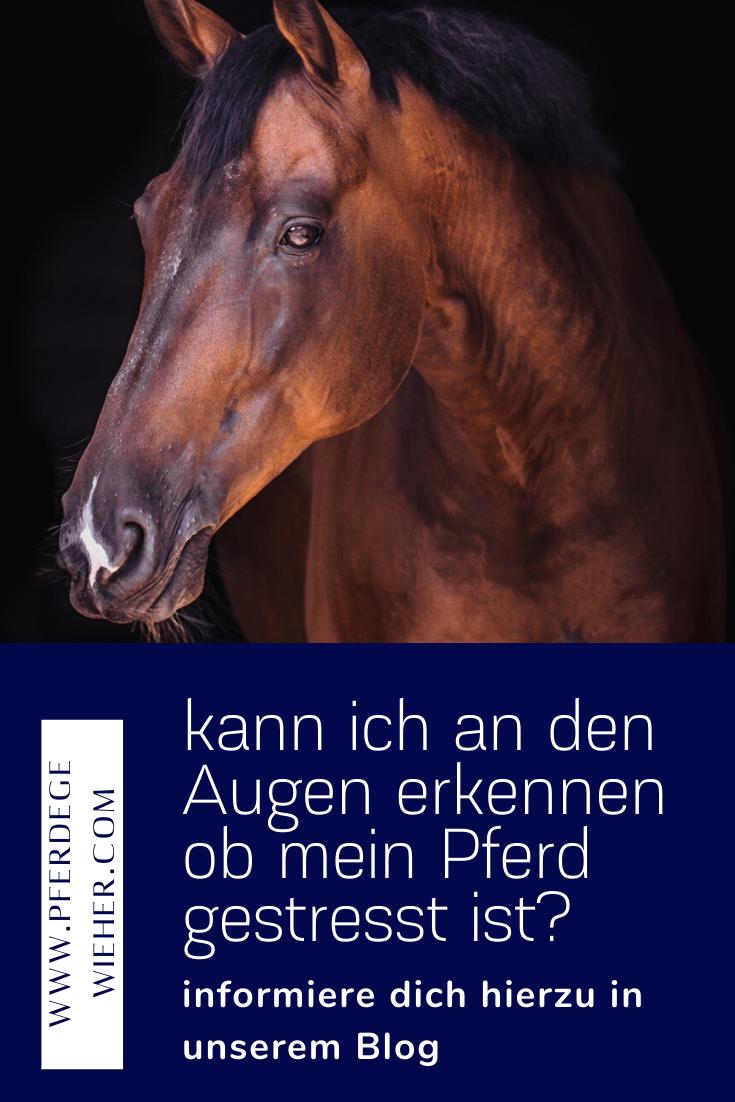 Pferdeverhalten Kann Man Stress An Den Augen Erkennen Pferde Blog Pferd Stoffwechselerkrankung