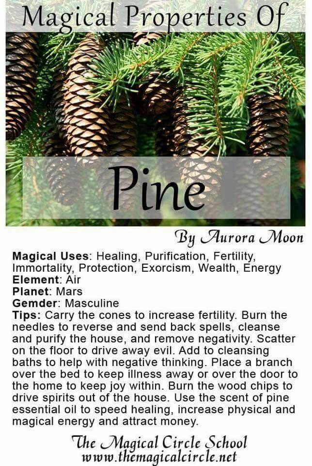 Magickal properties of Pine   Chants, Spells, Rituals, & more