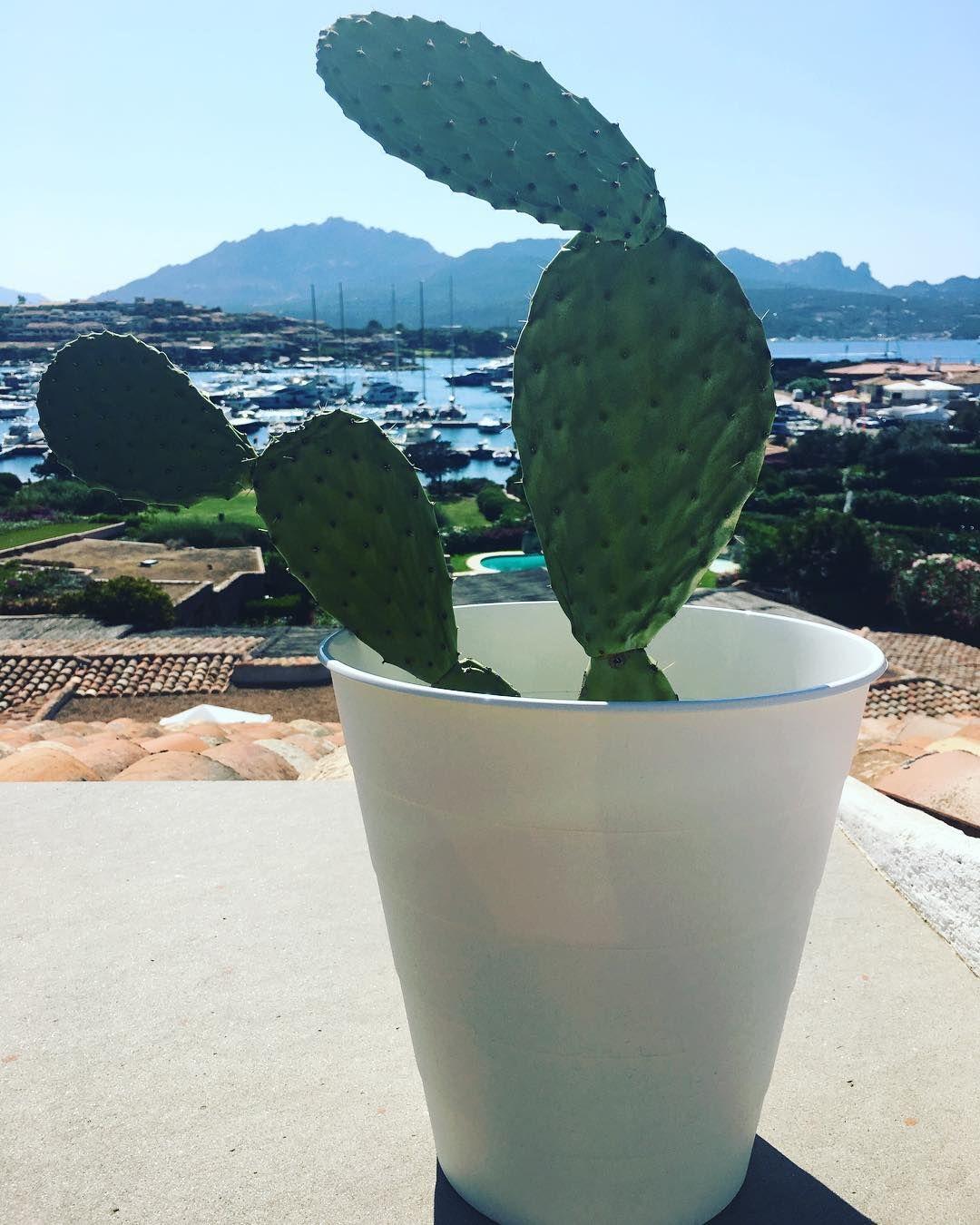 Estate e fichi d'India.  Oggi iniziano ufficialmente le vacanze! Sono volata in Sardegna per qualche giorno all'insegna del relax!