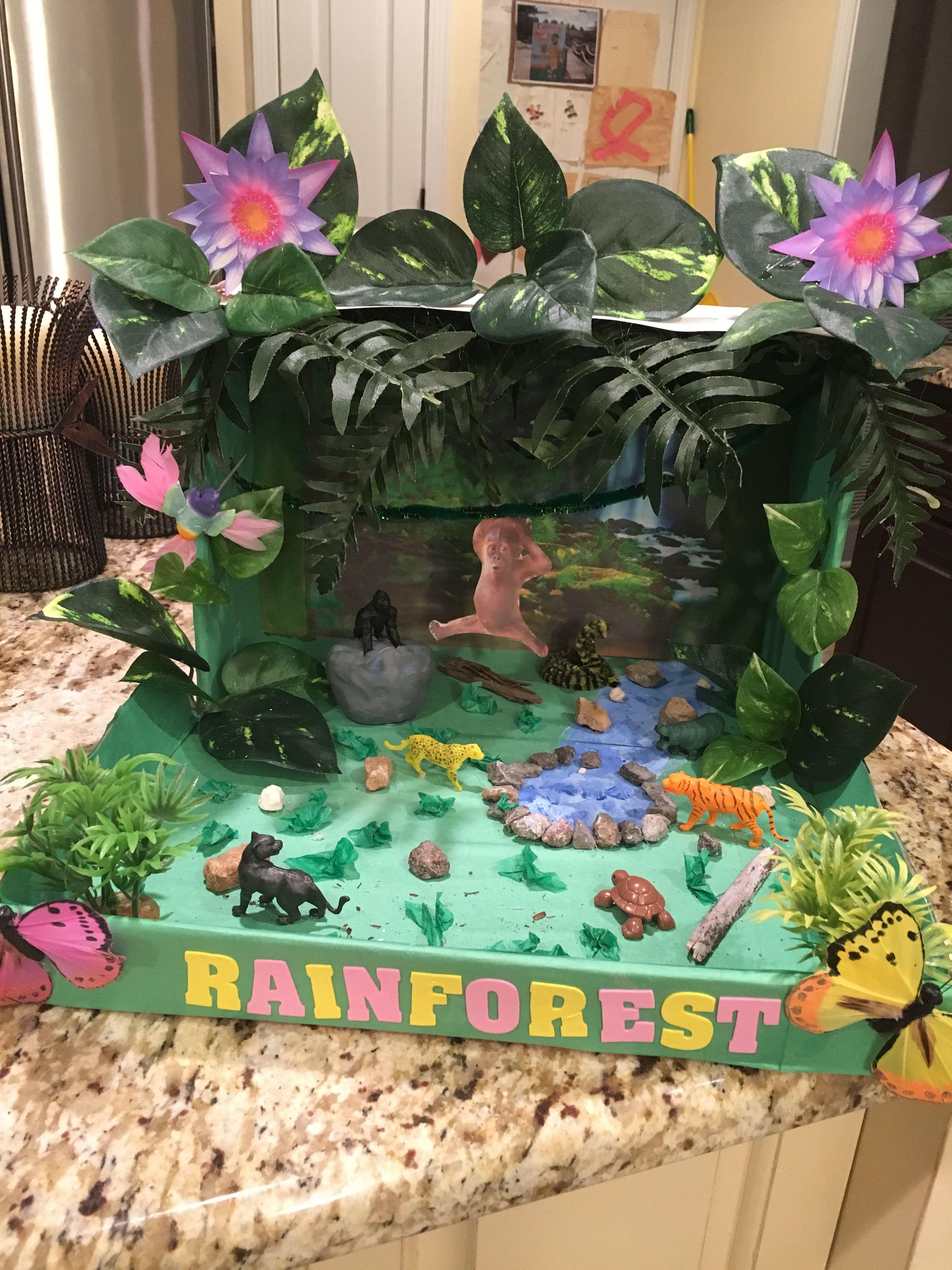 Rainforest Biome Project