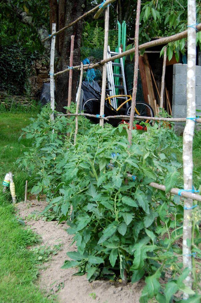 support tomate c t jardin potager pinterest potager tuteur tomate et jardins. Black Bedroom Furniture Sets. Home Design Ideas