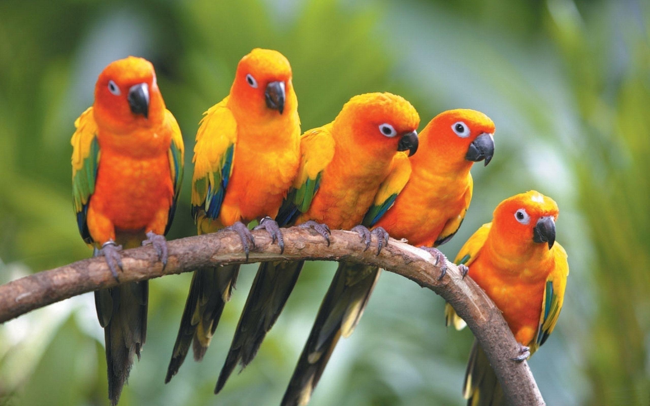 Australische Parkieten Google Zoeken Huisdier Vogel Vogel Foto S Parkieten