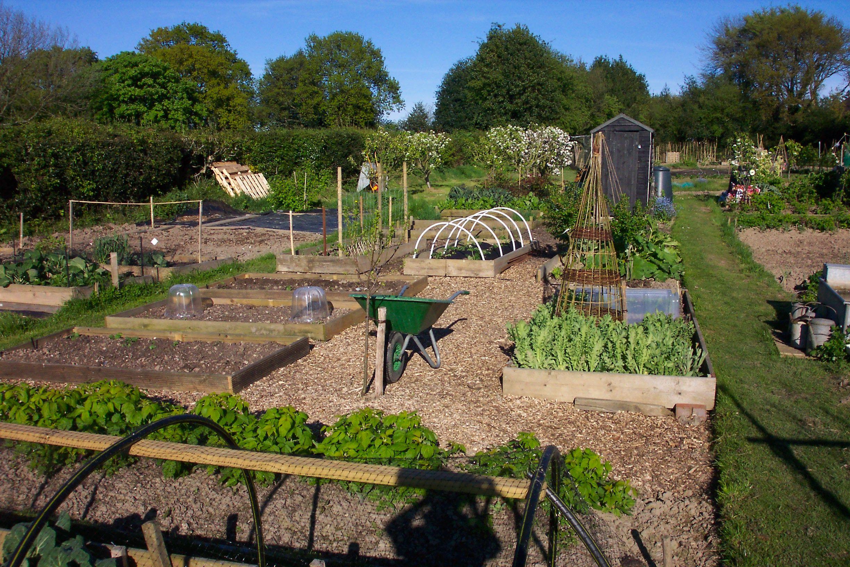 very neat allotment! | ultimate gardens | pinterest | allotment