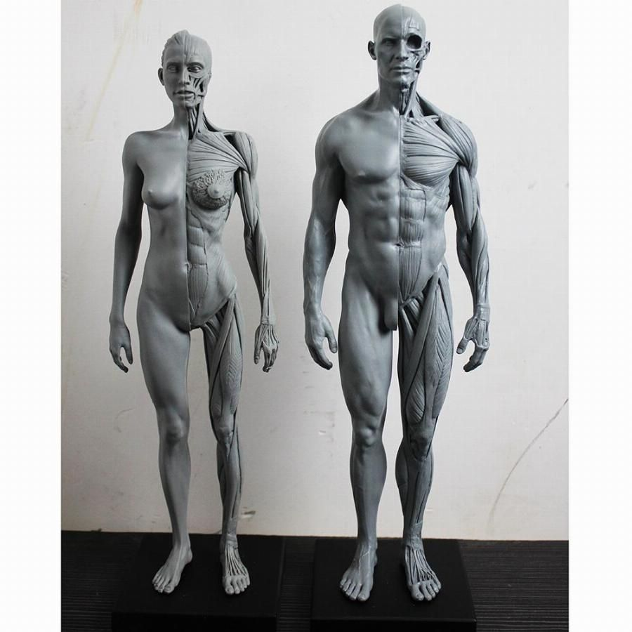 30cm-1-6-human-body-anatomy-model-cg-3dmax-model-teaching-model ...