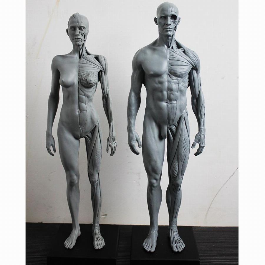 Pin By Junhwan Kwon On Anatomy Pinterest Anatomy Human Anatomy