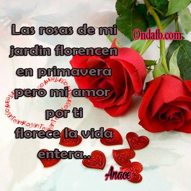 Frase bonita para enamorar con fondo de rosas