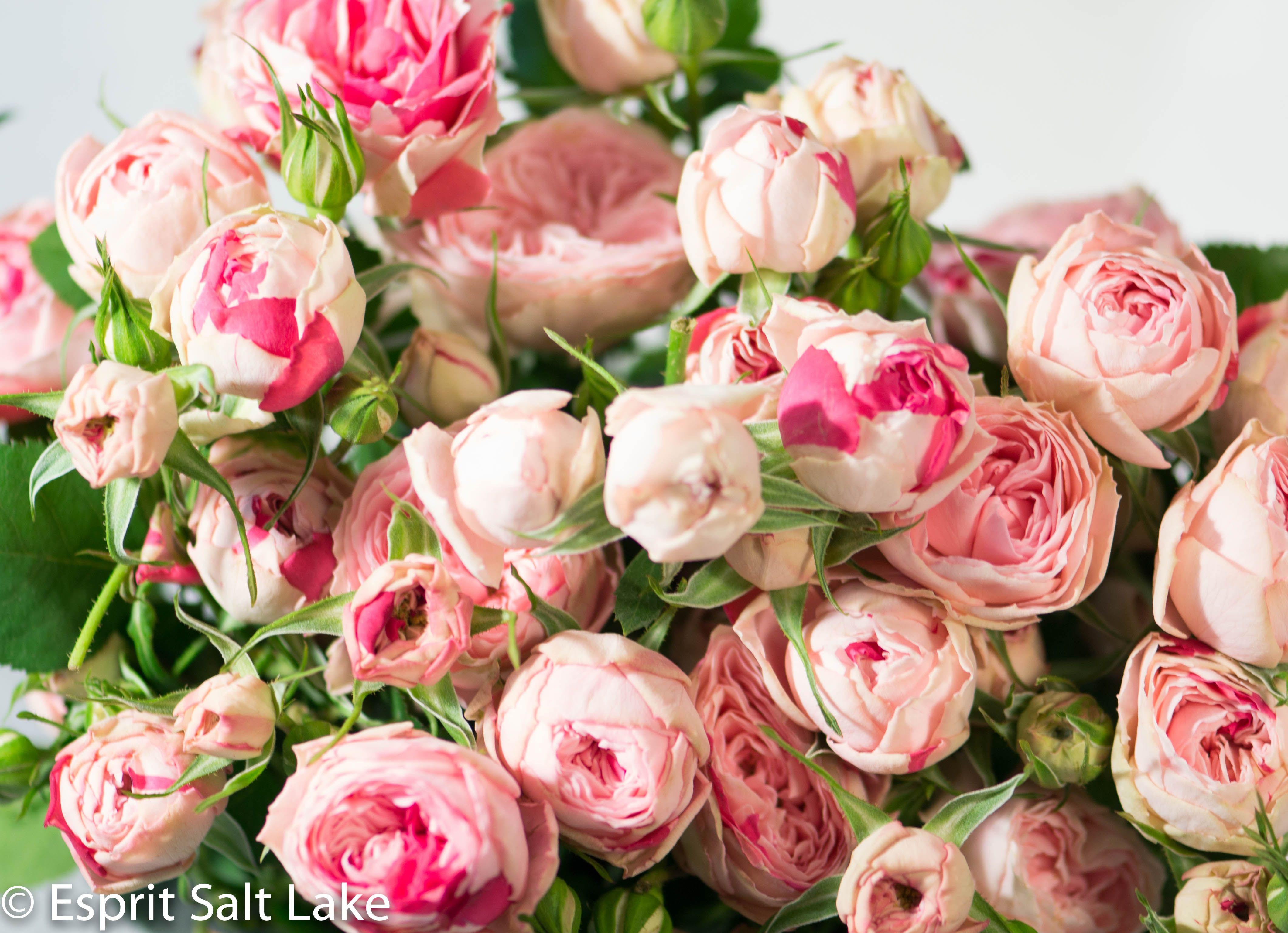 Speckled Opal Gem garden spray rose pink Spray roses