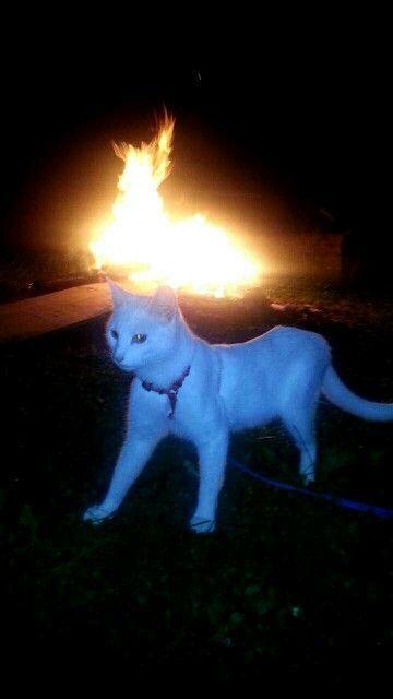 Bon fire kitty