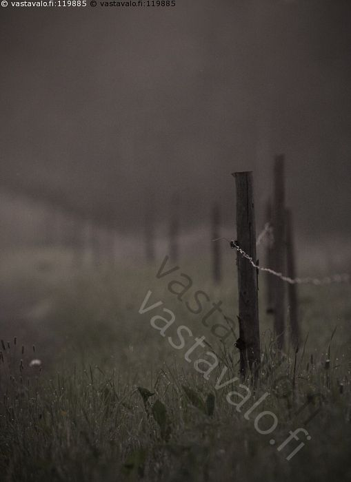 Yöllä - lehmihaka aita aitaus lanka sähkö pelto maatalous työ ammatti pelto viljely nurmi kasvi kasvusto tunnelma yö sumu usva jono lappi pohjoinen kostea märkä kesä vuodenaika