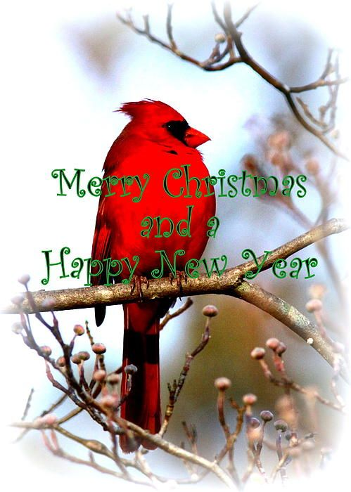 Merry Christmas Everyone and best wishes for now and the coming year! ~Dina
