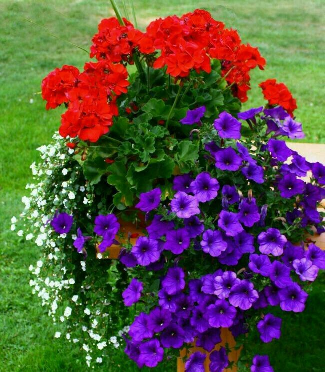 Pin by Sherry Clark on Wreaths Container gardening