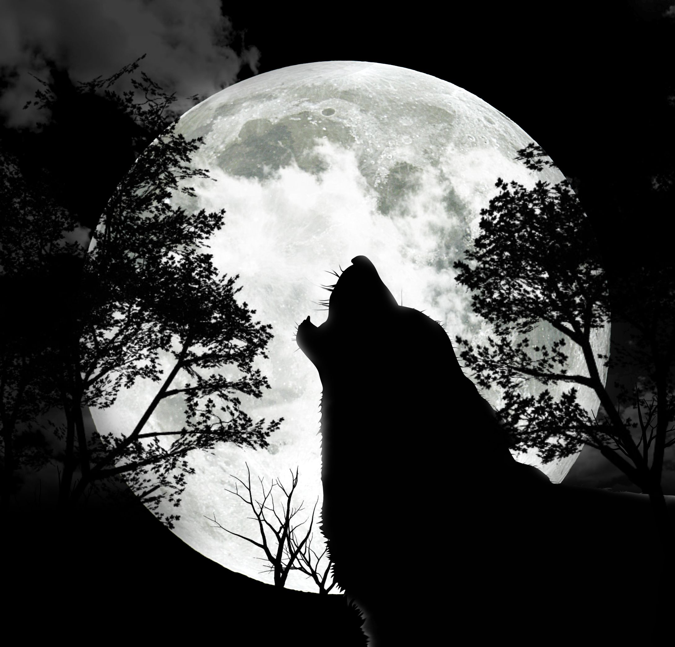 The Full Wolf Moon 9th January 12 Wolf Silhouette Wolf Howling Wolf Moon
