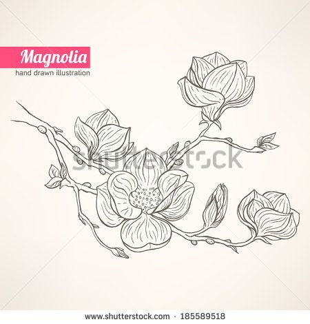 Found Some Free Vector Relate Free Downloadable Magnolia Flower Stencil Designs In Free Vector Magnolia Beautiful Backgrounds Flower Stencil