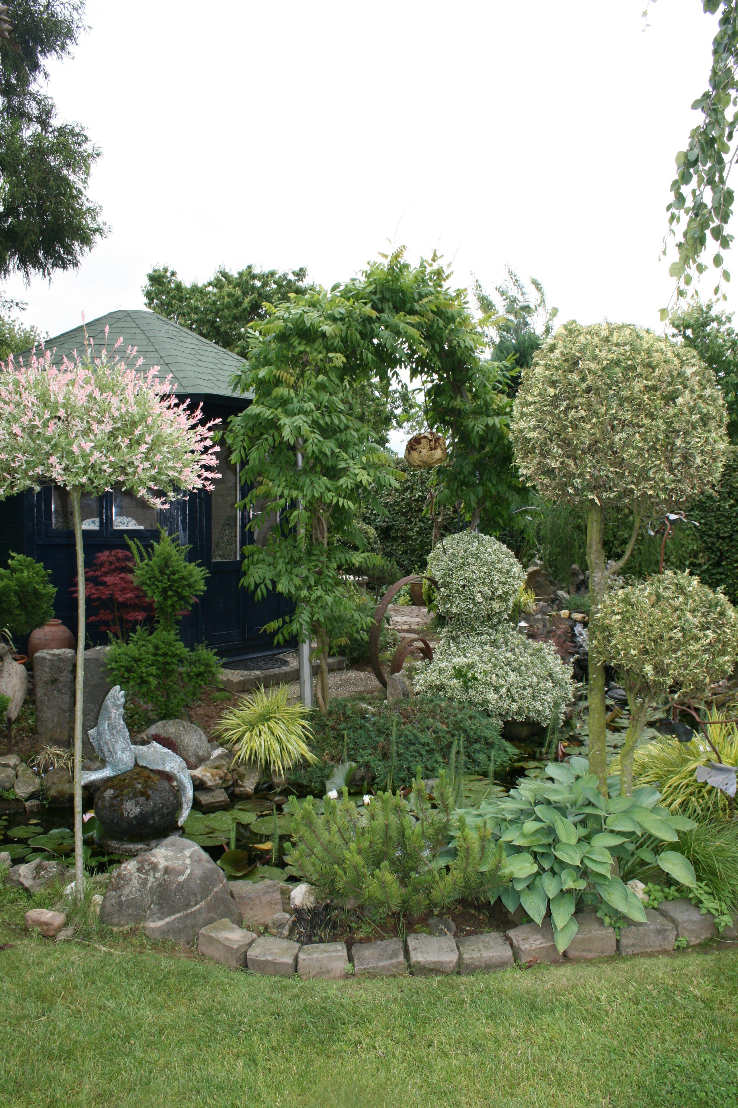 Formschnitt Euonymus Blauregenbogen Gartenreise Holland Outdoor Decor Garden Plants