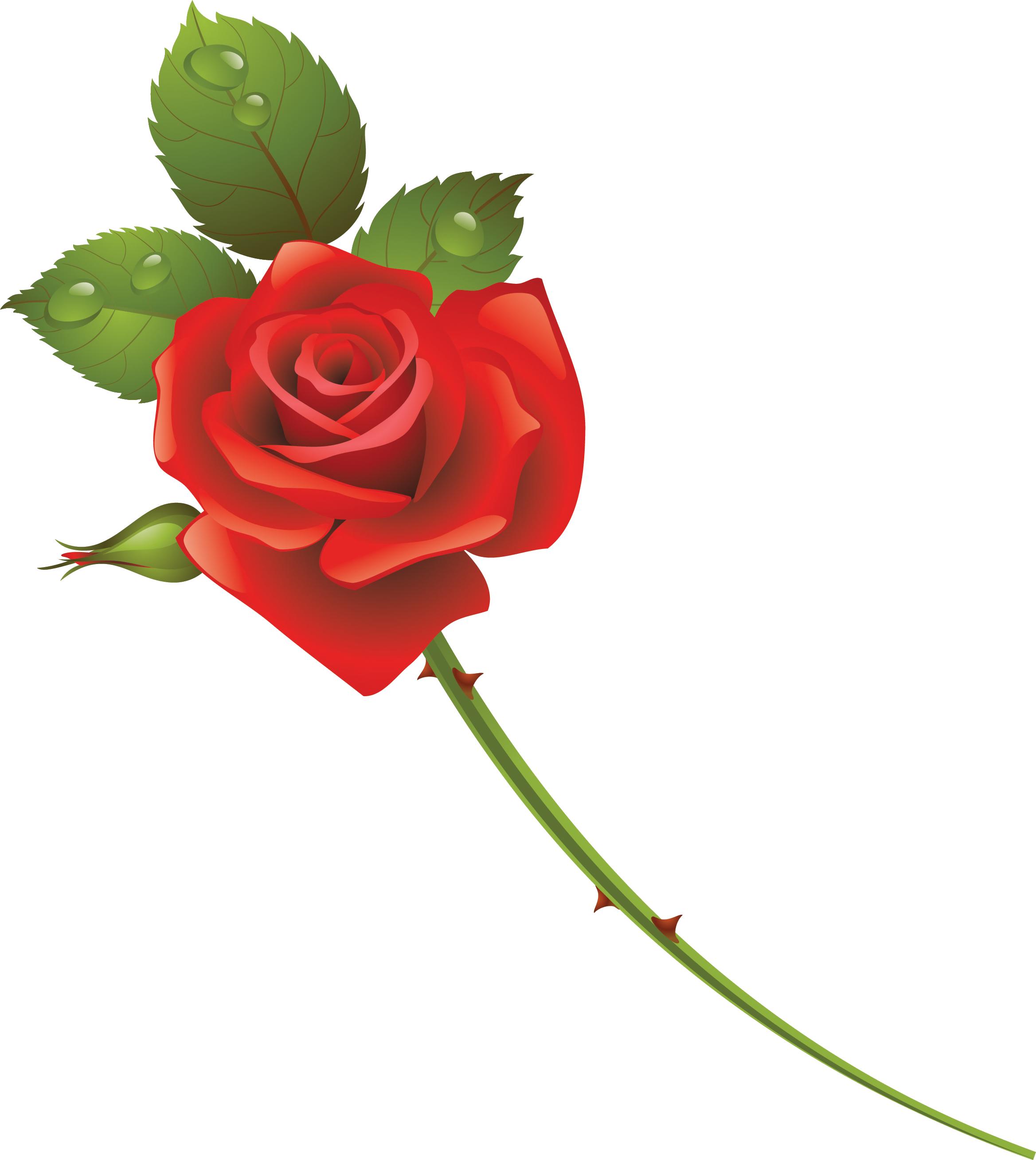 роза на белом фоне картинки мультяшные посчитали