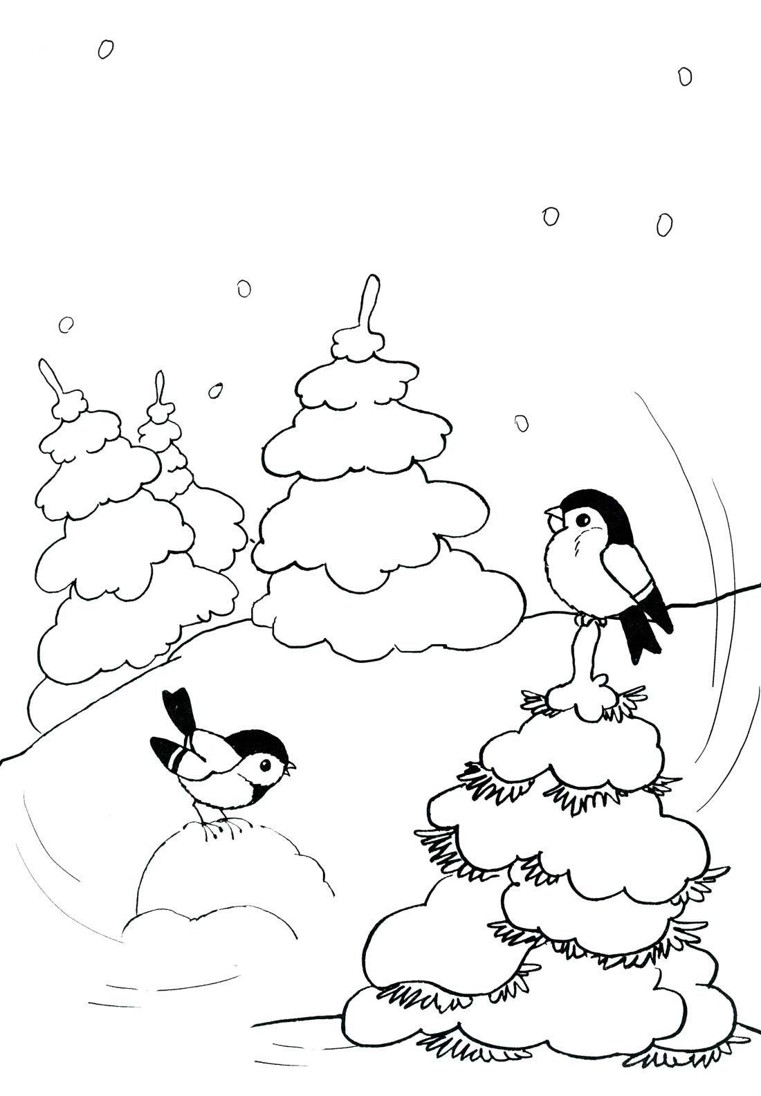 птицы снегири зимой раскраска | Раскраски