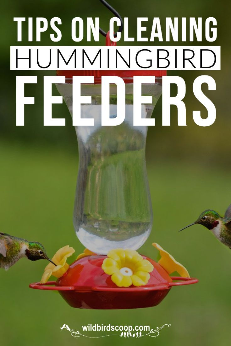 Cleaning hummingbird feeders the right way often wild