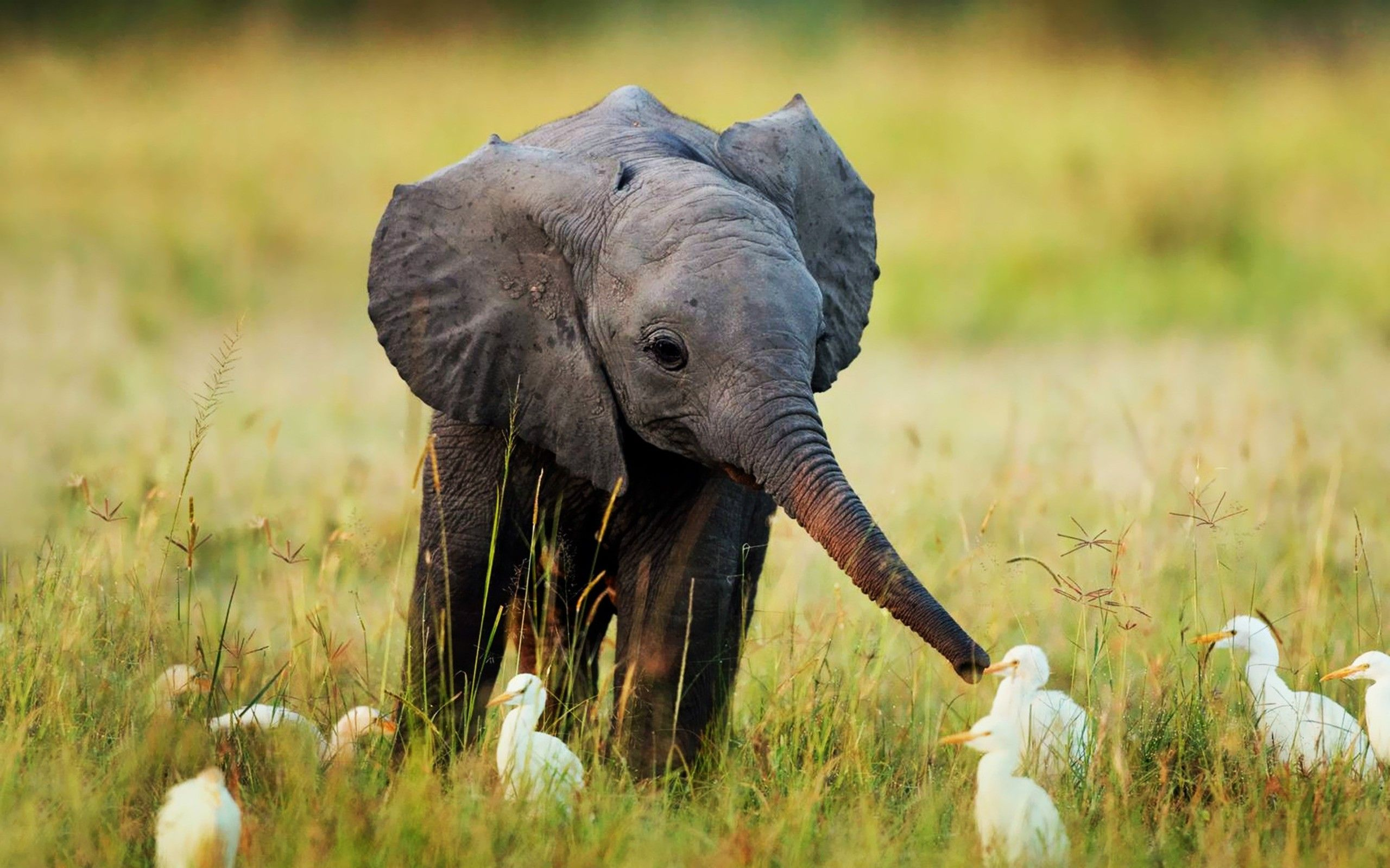 11 cute animals and inspirational quotes | baby elephants, nature