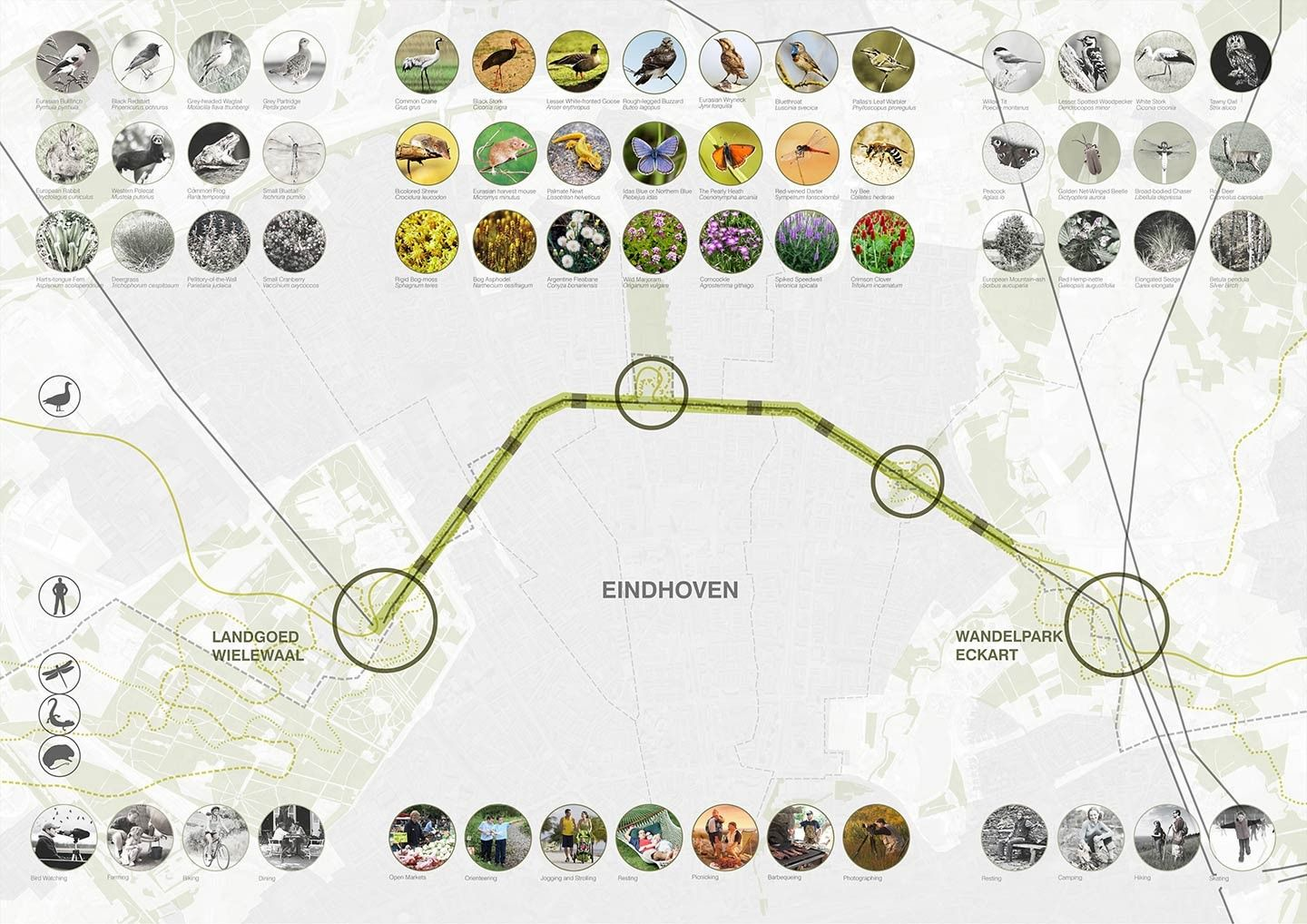 Eindhoven ecological energy connection species