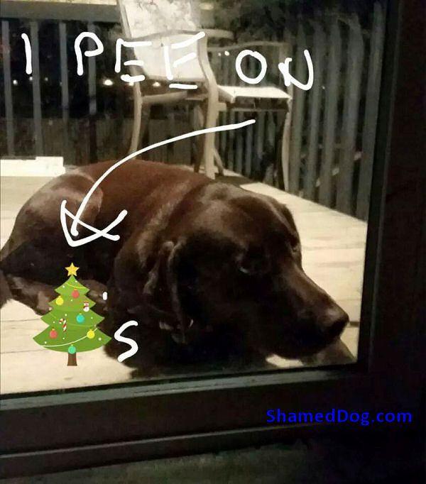 IP  #dogshaming