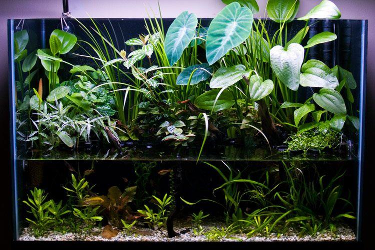 65 gallon south america biotope riparium page 4 aquascaping