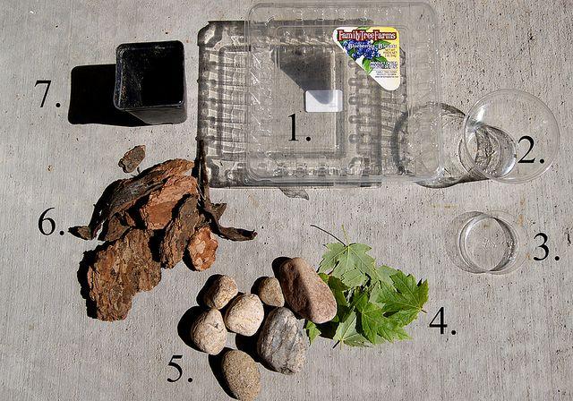 The Artful Life: Creating a Snail Habitat | Pet snails ...