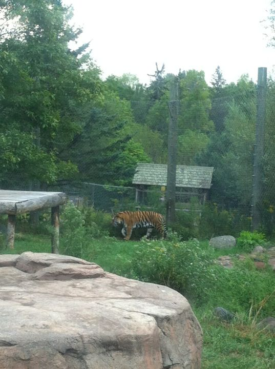 Lake Superior Zoo in Duluth, MN