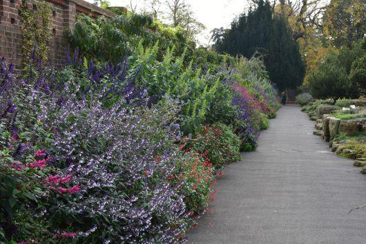 Attirant The Salvia Border At Kew Gardens.